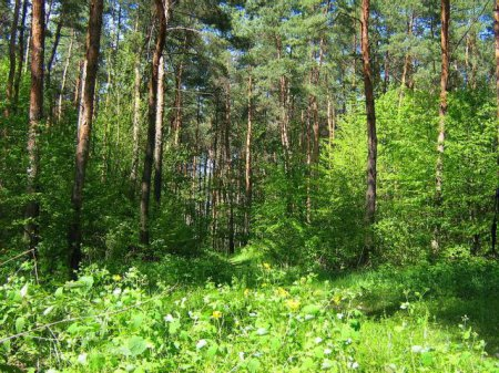 Вырубка лесов в Киевской области – общественность требует принятия серьезных мер