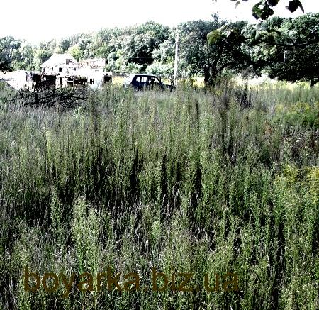 Продам участок в селе Новом(рядом Боярка)